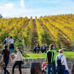Etyeki szőlőbirtok fesztivalok.info